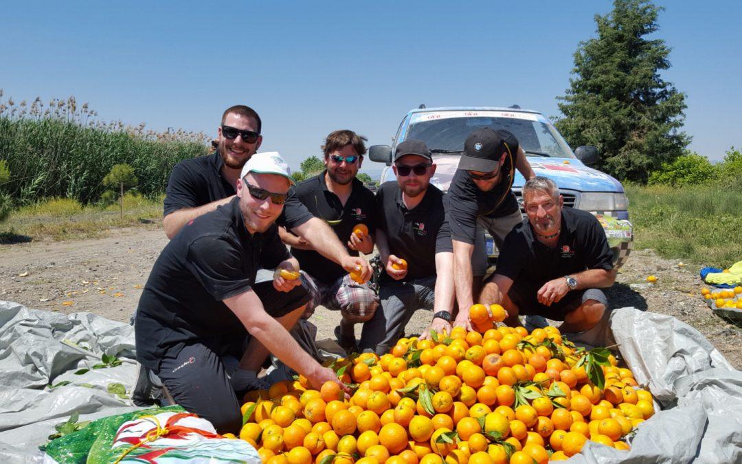 Sonderprüfung: Orangen pflücken